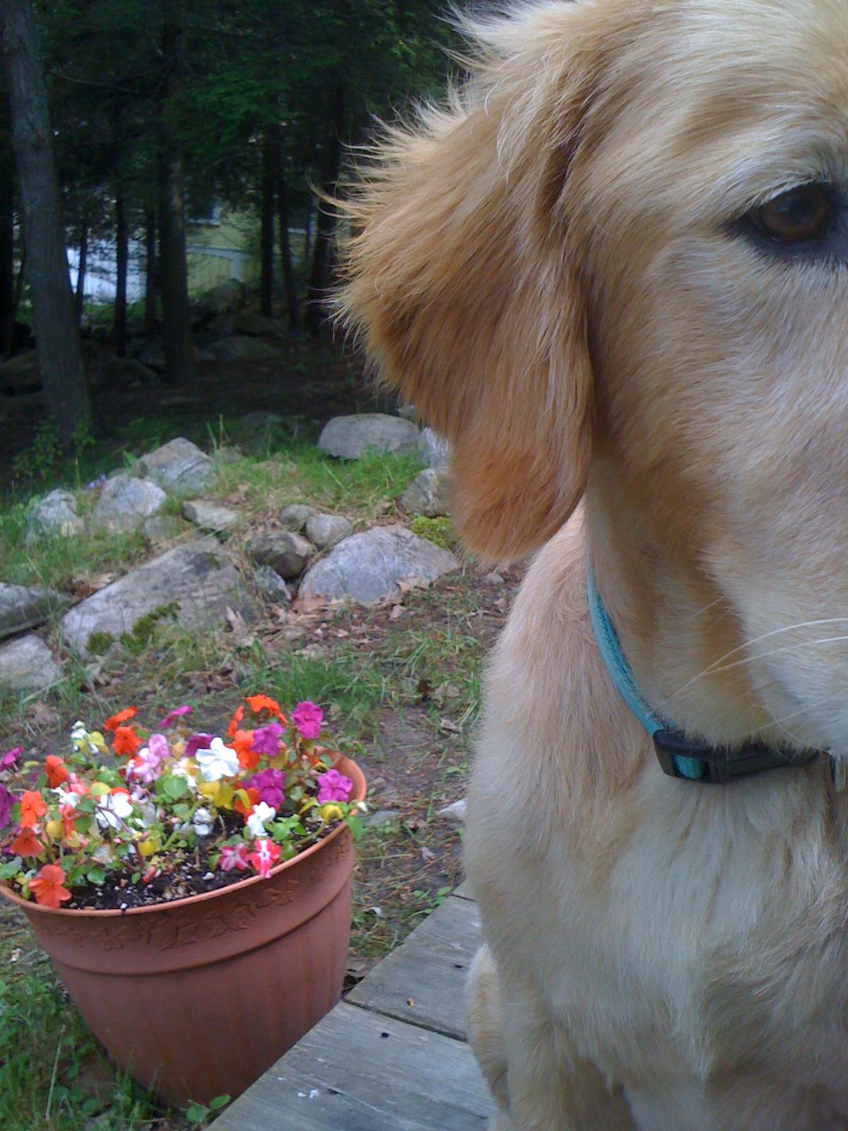 George, my cottage boyfriend